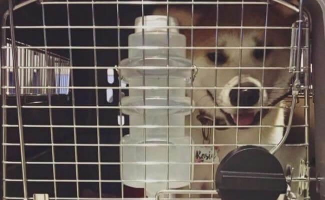Pre-boarding vet check in Tokyo