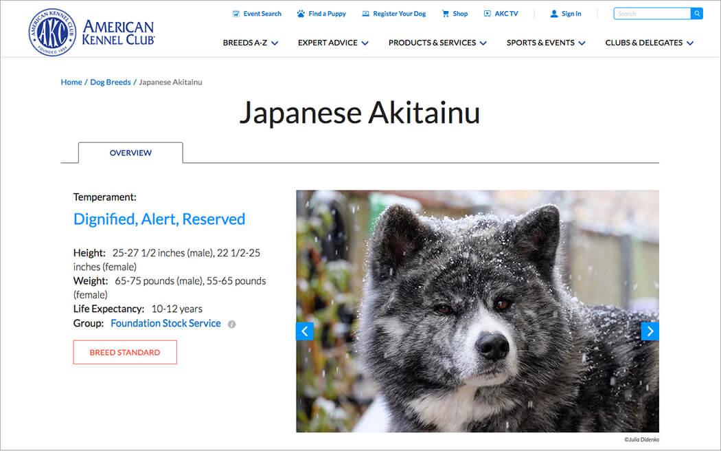 https://www.akc.org/dog-breeds/japanese-akitainu/